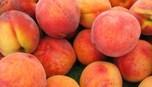 http://theeconomicsofhappiness.wordpress.com/2013/09/28/peaches-help-grow-slovenias-gift-economy/