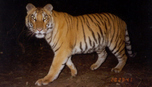 http://theeconomicsofhappiness.wordpress.com/2014/03/31/saving-tigers-local-knowledge-and-conservation/